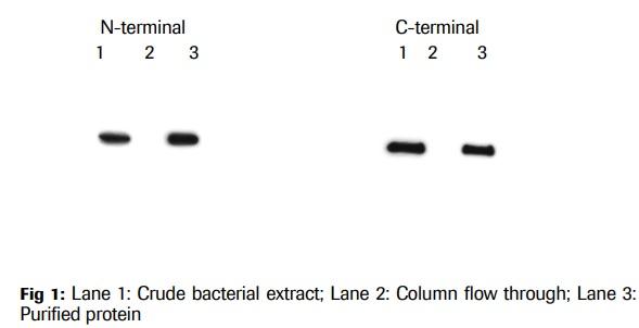 Anti-Protein C Affinity Matrix